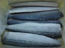 Supply spanish mackerel fillets