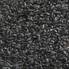 Black sunflower seeds 5009,5135,3670,909