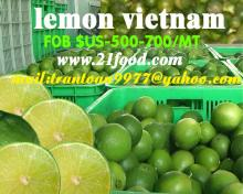 lemon vietnam