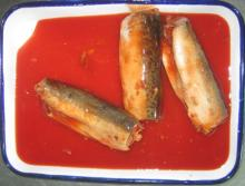 canned mackerels in tomato sauce