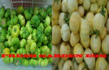 White and Green Garden Eggs Forsale (Fresh Vegetable)