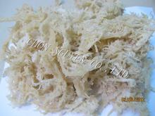 E.cottonii seaweed - white-