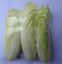 Baby Chinese Cabbage