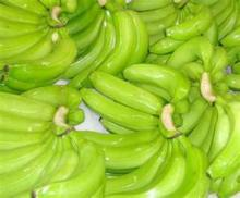 fresh green cavandish banana