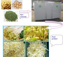 Sale bean sprout growing machine or sprouting machine