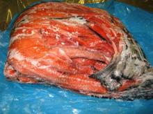 Salmon by Product and Salmon Heads