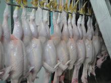 Slaughter House Equipment,  Butcher , Abattoir Equipment: Plucker/ Chicken Defeathering Machine