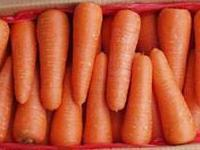 Carrot For Sale