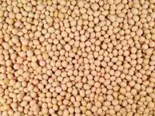 Non GMO Grade 1 Soybeans