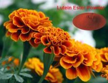 Lutein   Ester  10% TAB  Ester  Beadlet