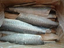 Frozen spanish mackerel fillets ( scomberomorus niphonius)