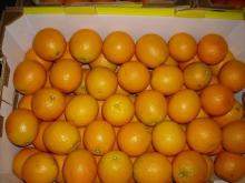 Fresh Citrus Fruits | Valencia Oranges | Lemons