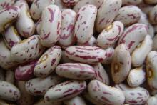 Light Spackled Kidney Beans, Cranberry Beans, Beans