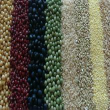 Organic Agricultural Grain