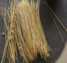 Organic allergy free spaghetti pasta