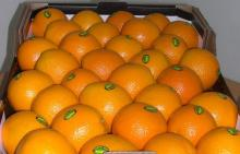 Fresh Valencia Oranges From South Africa