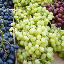 Fresh Grapes from South Africa