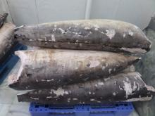 Frozen SwordFish DWT, Belly On