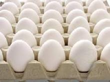 White Eggs Poultry from South Africa