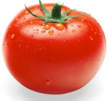 best quality fresh tomato,new crop