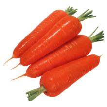 best quality fresh carrot,new crop,size : size:80g-150g,150g-200g,200g-250g,250g and up