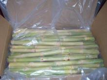 High quality Fresh & Frozen Sugar Cane Stalks
