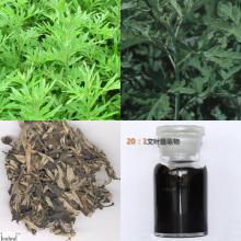 Argy wormwood leaf extract