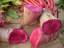 Red Radish Color