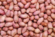 Jumbo Raw Peanuts
