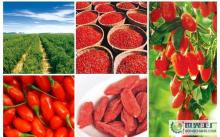 2013 High Quality Qinghai Goji Berries