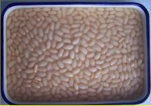 Canned white kidney bean Chinese Origin