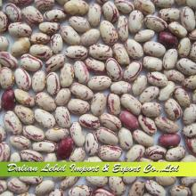 2014 Crop High Quality Wholesale LSKB American Type,Light Speckled Kidney Beans,Beans Round Shape