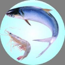 chitosan (food/tech grade)