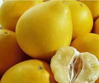 Delicious  Sweet  Fresh  Fruit / Pomelo