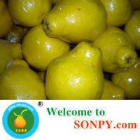 Shatian Pomelo,Pummelo,Fresh Fruits,Grape Fruits