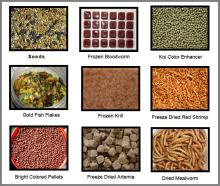 Aquarium Fish Food Pet Food