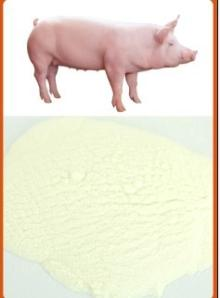 Porcine Collagen
