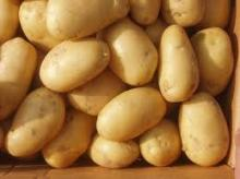 Best Quality 2013 New Fresh Potato