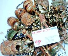 DRIED CRAB SHELL, LOBSTER SHELL, SHRIMP SHELL