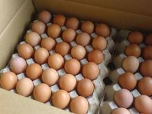 Fresh White and Brown Eggs..