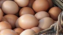 FRESH TABLE BROWN CHICKEN EGGS