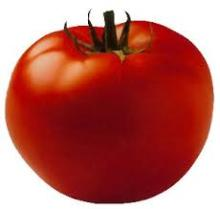 GRADE A FRESH TOMATOES FOR SALE
