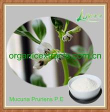99% L-dopa Mucuna Pruriens P.E for Parkinson's disease