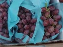 Fresh Grapes (South Africa)