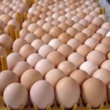 Fresh Brown & White Table eggs