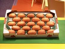 29x49cm High Quality Plastic Kiwi Packaging Tray