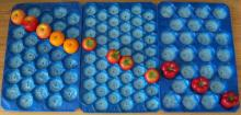 China Made Different Sizes and Colors Plastic Tomato Punnet Tray