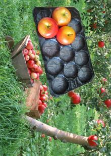 SGS Certificate 29x39cm Plastic Fruit Nest Tray