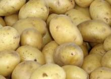 Fresh Bestfoods Potatoes of the best quality cultivated extensively with organic fertilizers.