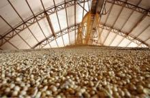 SOYBEANS GMO / No-GMO